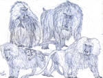 Baboon Study