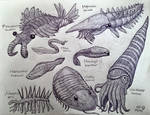 Cambrian and Ordovician Animals