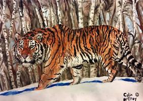 Siberian Tiger by MickeyRayRex