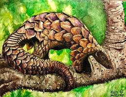 Pangolin by MickeyRayRex