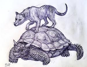 Meiolania and Thylacine