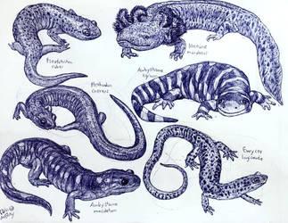 Salamanders of Ohio by MickeyRayRex