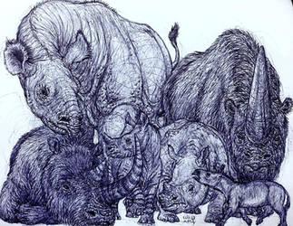 Long Lost Rhinos