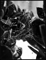 SPIDERWEBS by susha017
