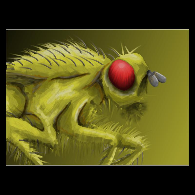 Fruit Fly by AscendedArts