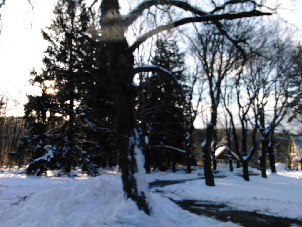 Sunshine Snowy Scenery by SimplyKristina