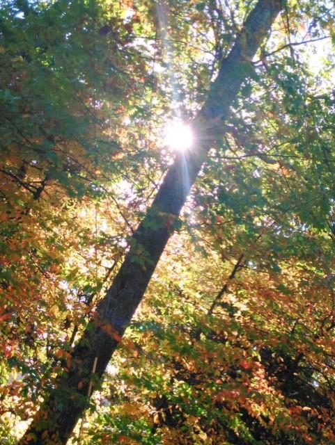 Fall Beauty by SimplyKristina