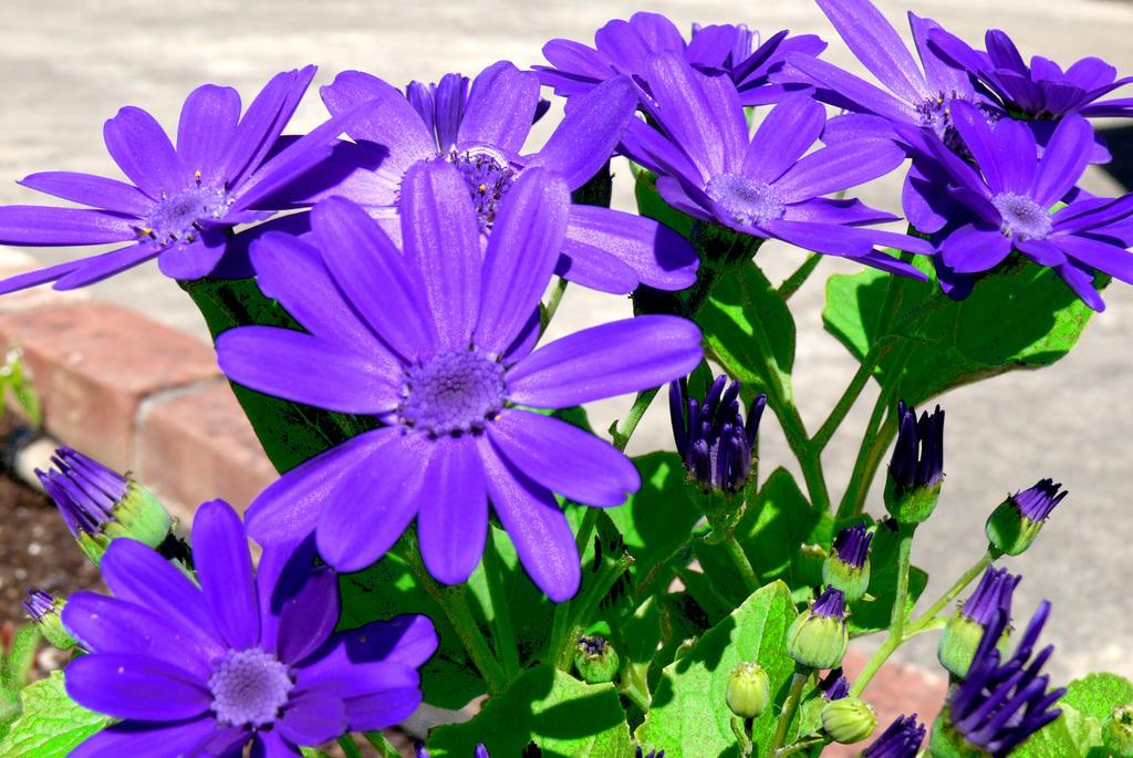 Flowers 01 by PotatoeHuman