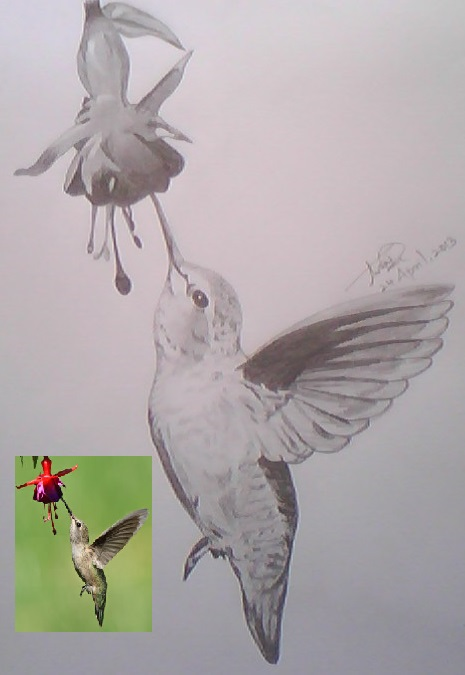 Pencil sketch of humming bird by thishaja