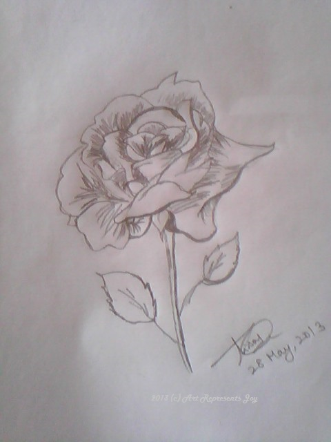 Rose pencil sketch by thishaja