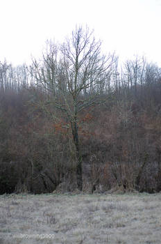 third tree 1