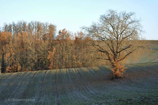 the oak tree in the field 1