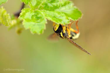 14th april - dewy bug