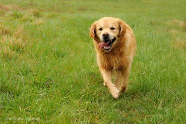 14th april - dewy dog