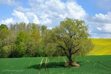 19th april - tree in field