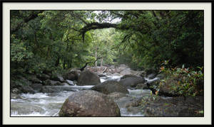 the daintree