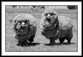 sheep by ben5069