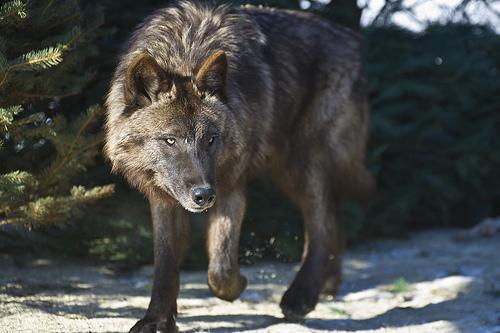 Rhuna khacoa by brokenwolf1398 on deviantart sciox Images