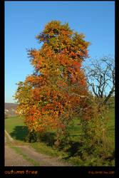autumn tree by Oli4D