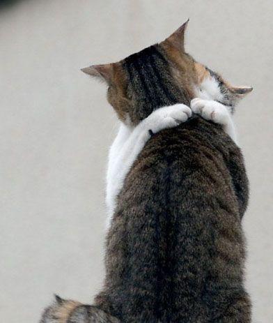 Hug by Ryosaeba24