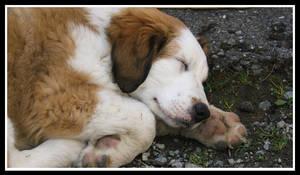 puppy by faithfuljean