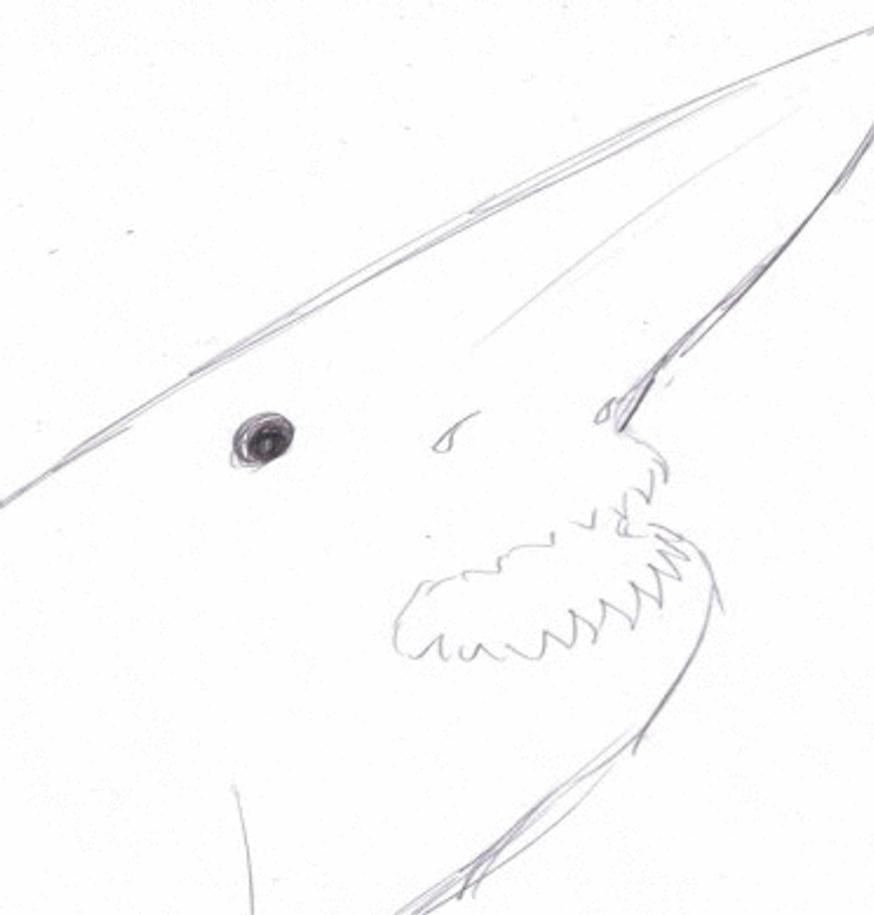 how to draw a goblin shark