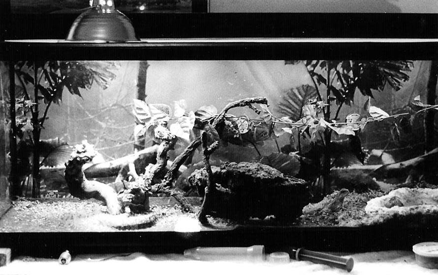 Water Tank Magic : Puff the magic water dragon s tank by allhailz on deviantart