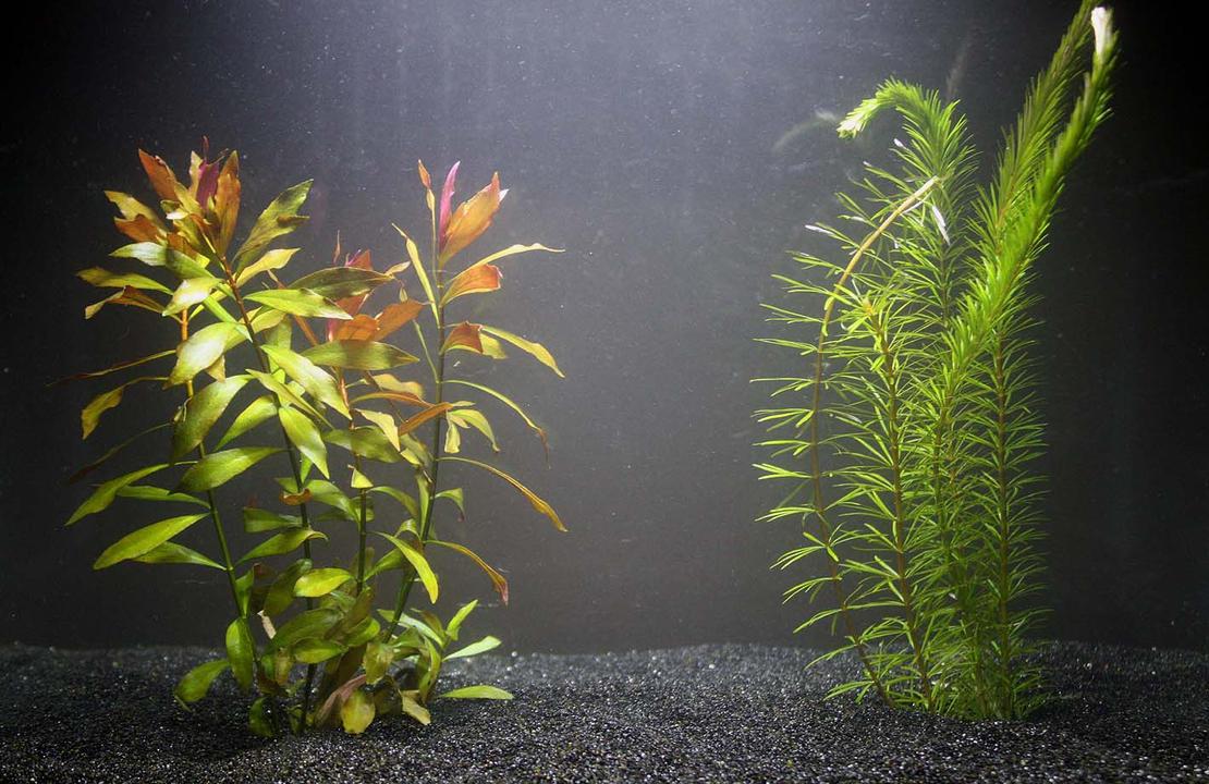 Aquatic Plants 3 by AllHailZ