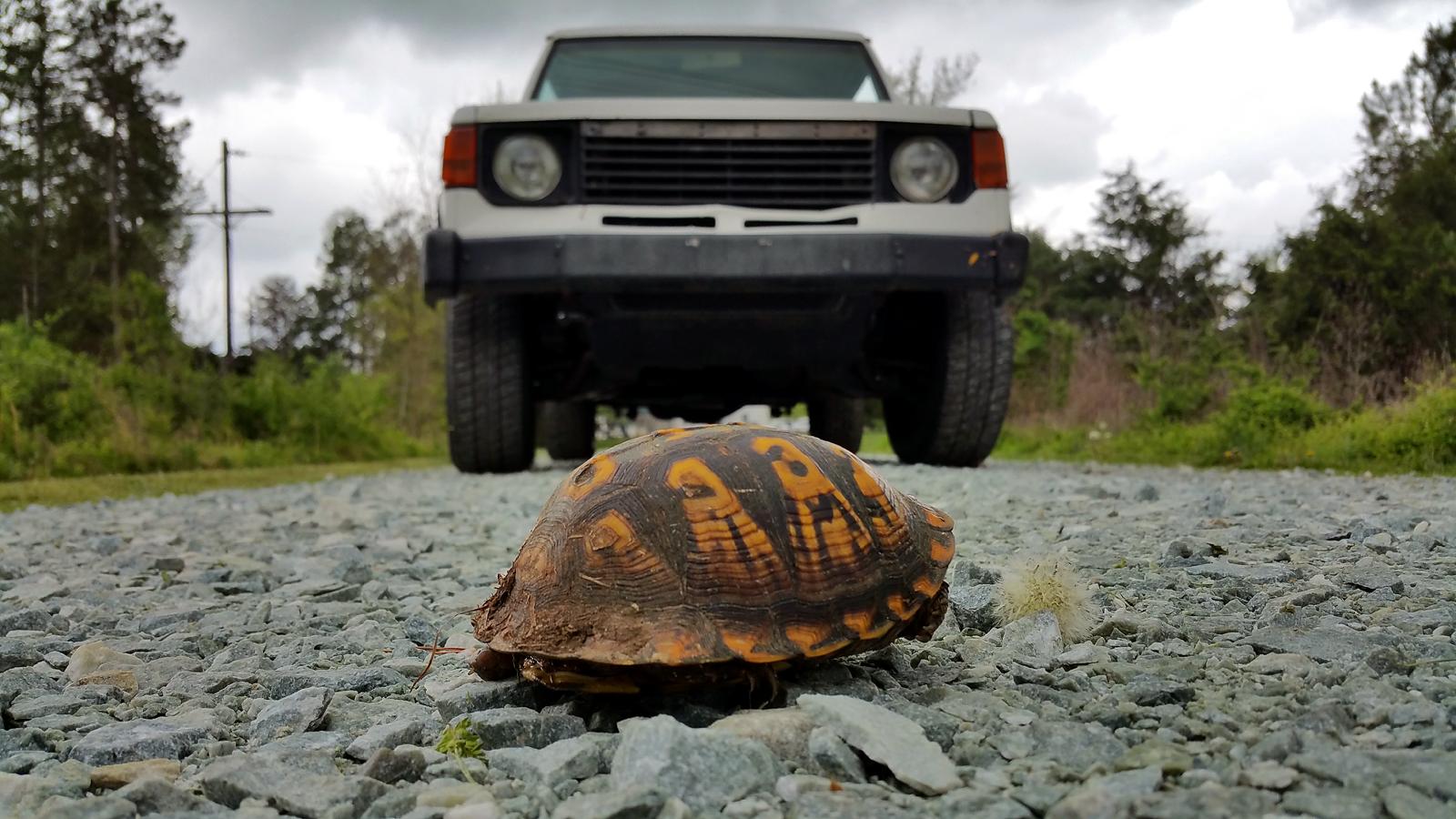 Turtle Meets Montero by AllHailZ