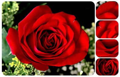 Rose Pieces by princessmartini