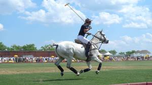 'Gallop'