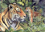 Tigers in the Forest