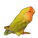 lovebird icon by studio-emi
