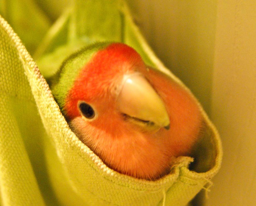 Peek-a-boo by studio-emi