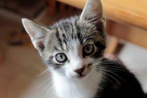 Pet me please by Plankan91