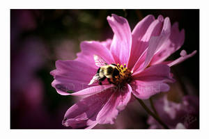 Nectar of Life by Elvandia