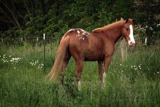 The Prettiest Pony