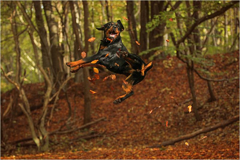 Fall by landkeks