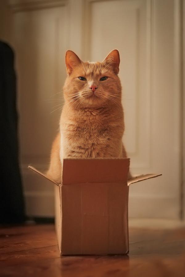 Carton King by landkeks