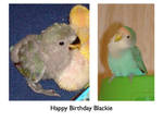 Happy Birthday Blackie by kittenwithawhip89