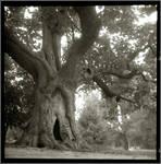 Old tree by edwardowe