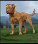 Mastiff of the French
