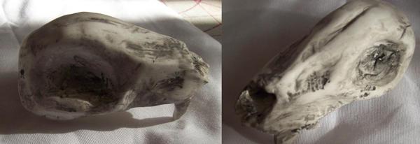 wolf skull by lilmissmaya
