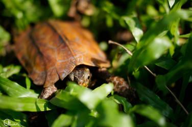 Hello, little turtle
