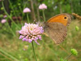 butterfly5_magnesina by magnesina-stock
