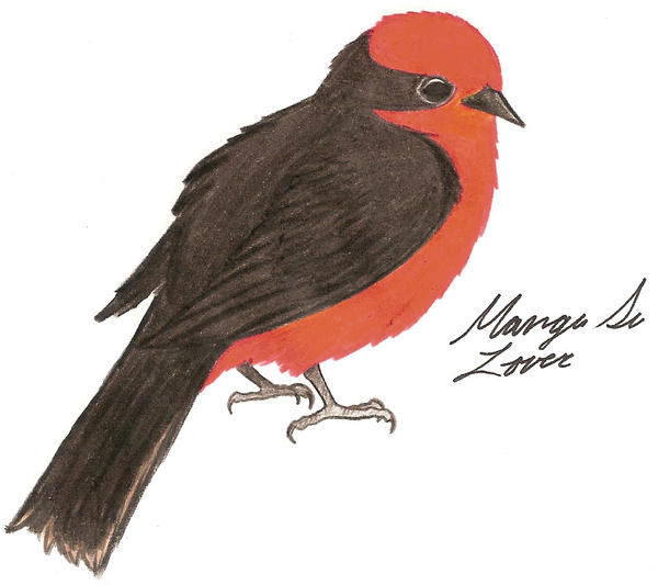 Vermilion Flycatcher by Nukeleer