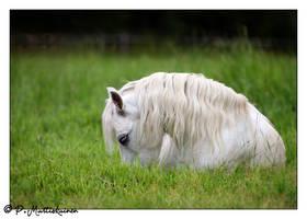 Real-life Unicorn by paddee