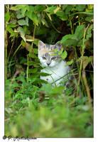 Itty bitty hiding kitty by paddee