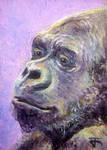 ACEO-Gorilla