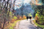 Autumn Walk In The Park 3808